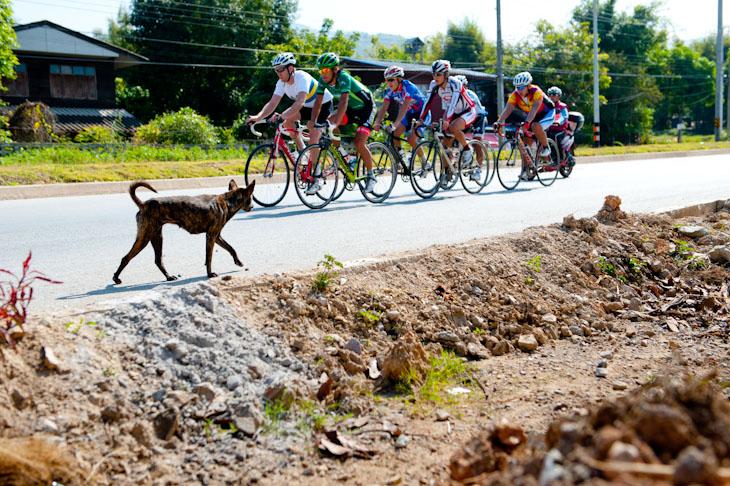 沿道にはイヌやニワトリや猫や牛や羊がたくさんいる