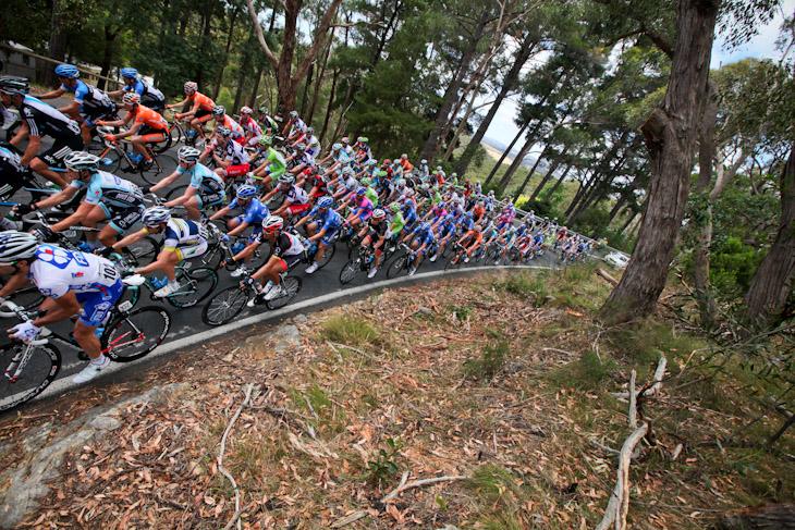 樹々に覆われた周回コースを進むメイン集団
