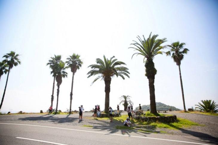 フェニックス。温暖な小豆島を代表する光景だ