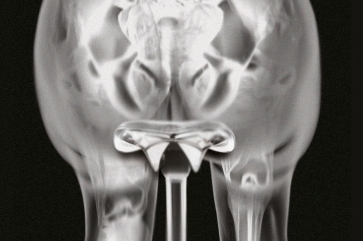 坐骨中心部とフラットなサドル上部が面接触することで痛みを低減している