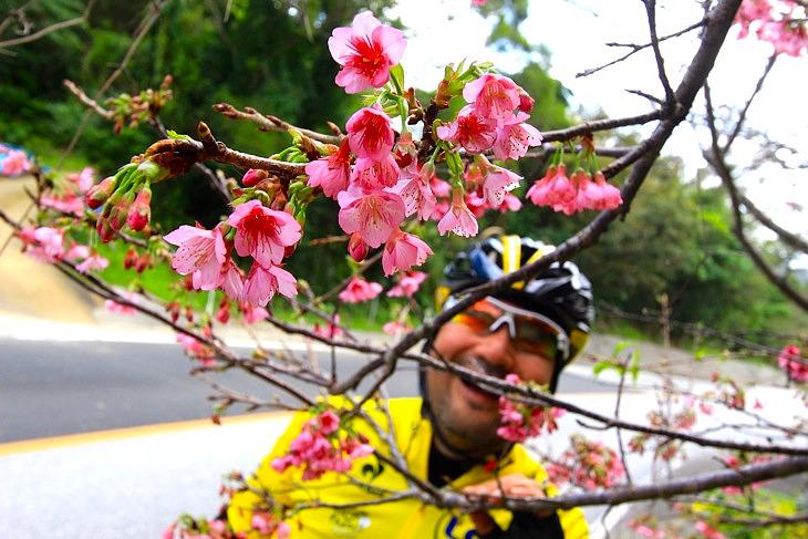 """今年も""""日本一早い桜""""に逢う事ができました。"""