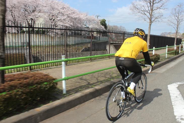 すっかり春めいてきた平野部の桜はほぼ満開だ。