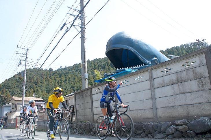 その意図は判りませんが、クジラがお出迎え。