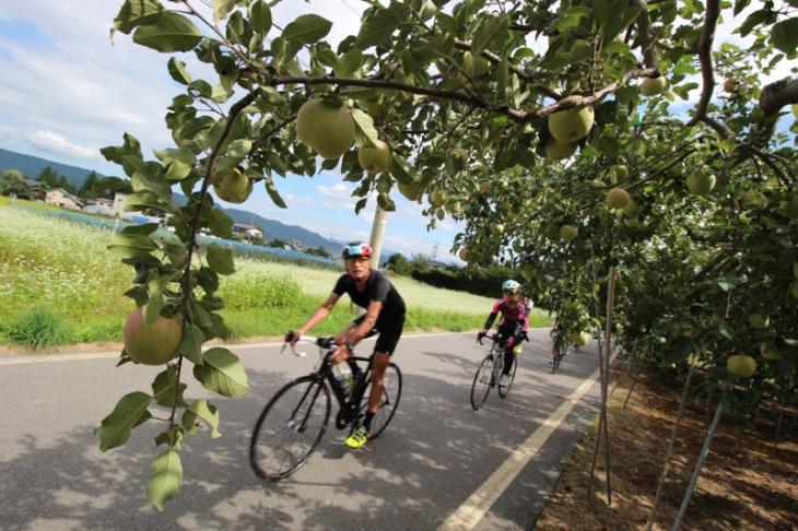 リンゴもそろそろ収穫かな