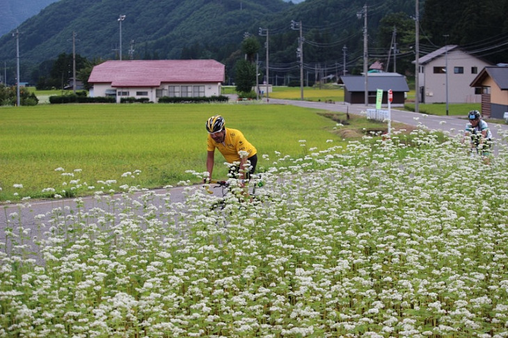 信州名物のソバの花が咲き乱れています。