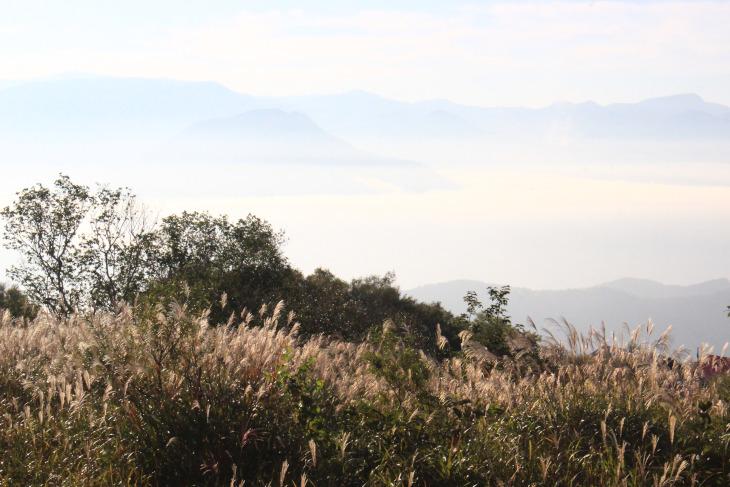 雲海に揺れるススキと季節は秋真っ盛り
