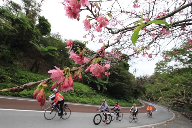 日本一早く桜が咲くのも沖縄だ