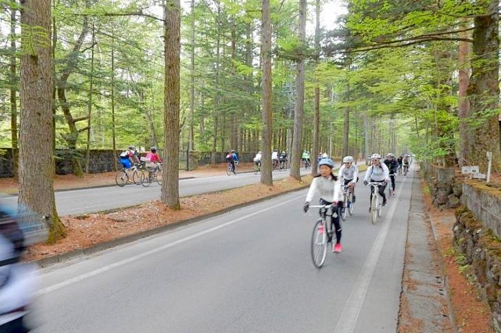 三笠ホテルに向かう林間路。とても気持ち良い区間です。