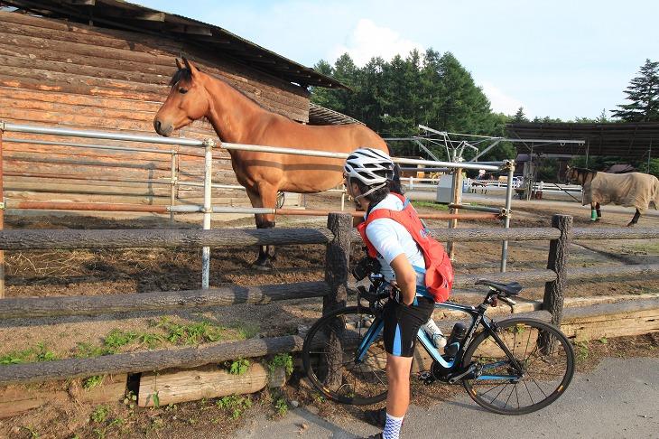 途中には馬の牧場も。