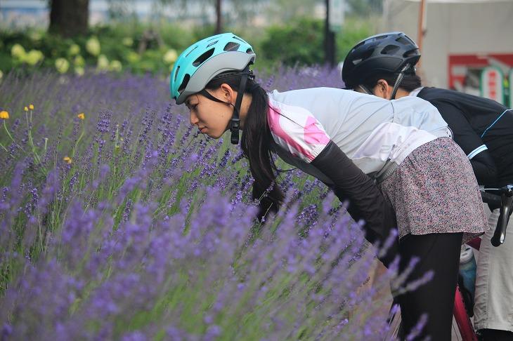 ラベンダー祭りが開かれていた八木崎公園。ラベンダーって乾燥させなくても良い匂いがするの?