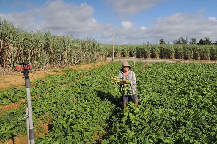 畑で作業のお母さんに話しかける。間引いた大根はきざんで食べる言ってた