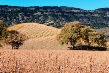 ぶどう畑とオリーブ畑、その向こうに延々と続く丘陵地帯: Photo: Jered Gruber