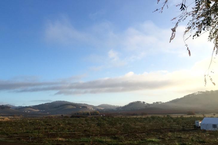 ぶどう畑とオリーブ畑が無限に広がるカリフォルニア、ナパバレー