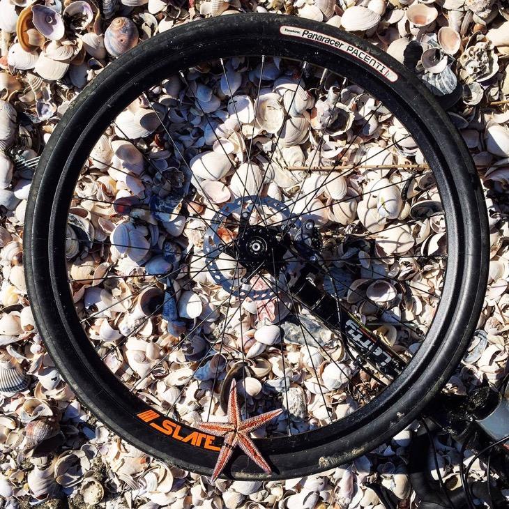 富津岬南側の砂浜は貝殻の絨毯だった。シャリシャリと独特の音を響かせて走った