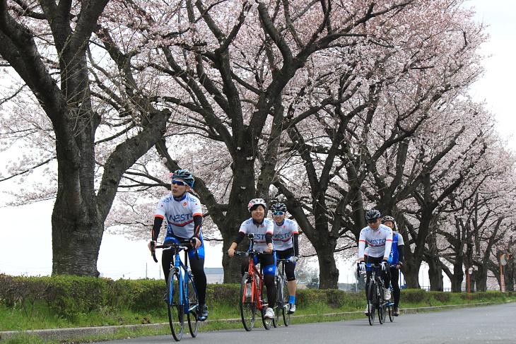 4月1日は桜が7分~満開と見応えバッチリだった