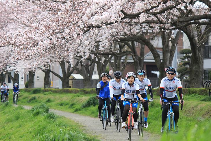 桜でできたアーチの下をくぐり抜けていく