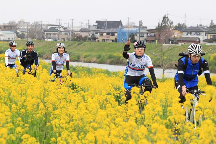菜の花もピークを迎え、黄色い花に囲まれながら一行は進んでいく