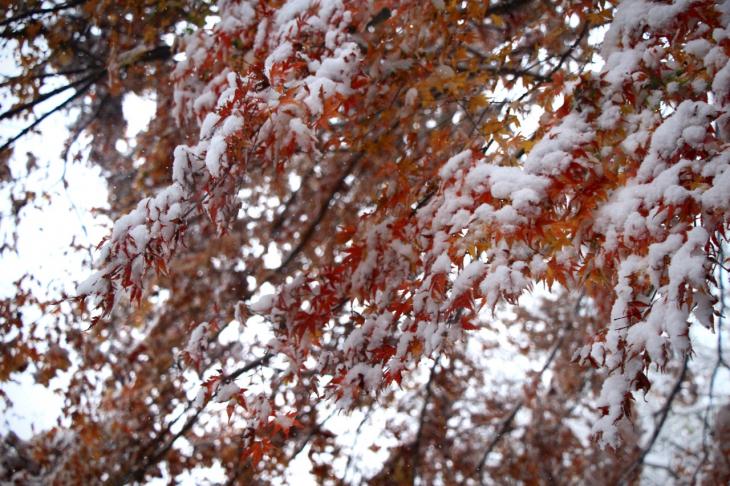 突然の雪が紅葉とのコラボレーションを見せてくれた