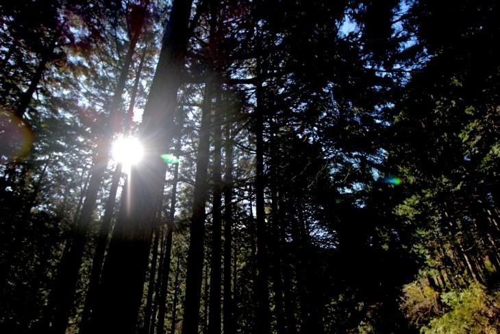 眩しい木漏れ日。手が入った杉林が美しかった