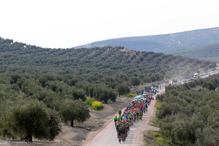 オリーブ畑が広がるアンダルシア地方の内陸部を走る