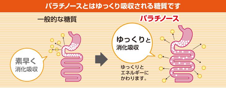 パラチノースなどのスローカロリーシュガーは小腸でゆっくりと吸収される特徴がある