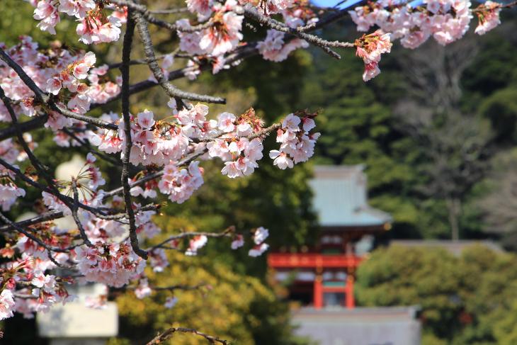 花も咲き始め春到来を実感させられる