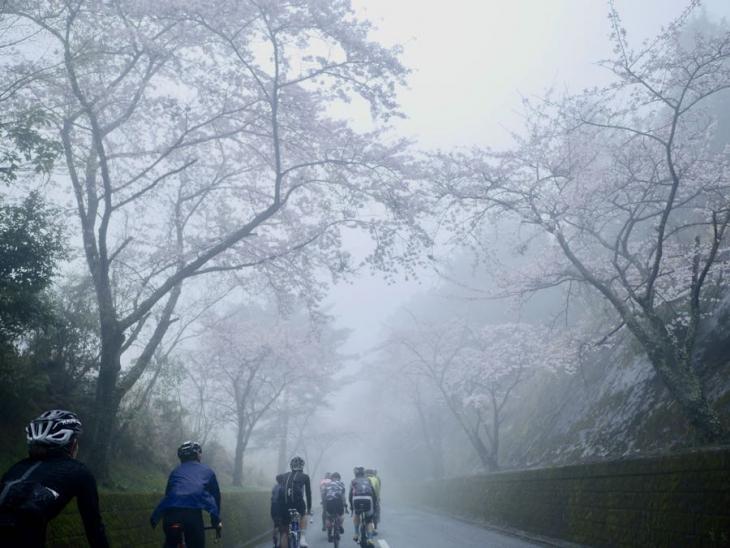 4月8日(土)大分県田ノ浦 霧が幻想的で桜とのコントラストが美しい