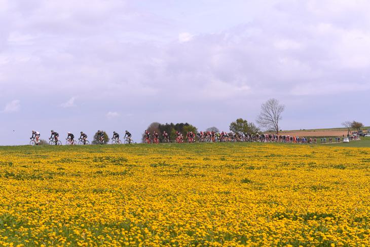春色のオランダ・リンブルフ州を走る