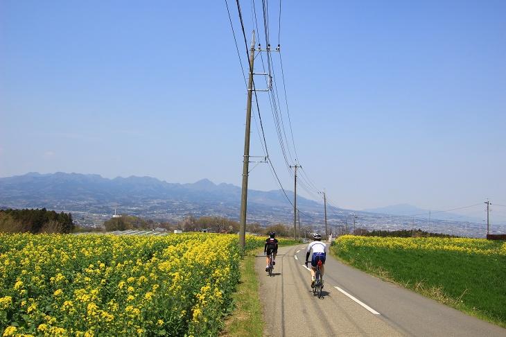 菜の花が咲き乱れる鼻高展望花の丘は私が練習したくない時に夕方4時から走る定番コースだ