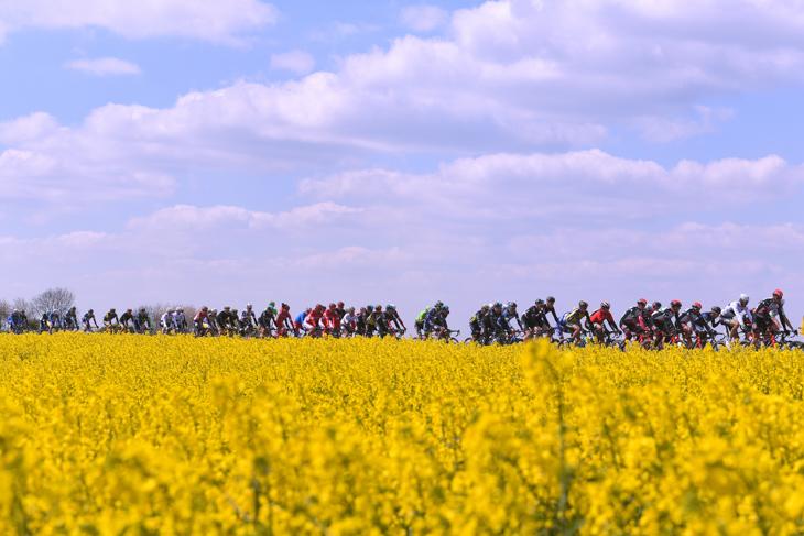 黄色い絨毯を進むメイン集団