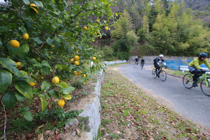 レモン畑の間を縫って走る農道になった