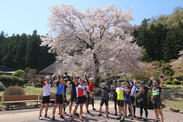 和紙の里東秩父の桜の巨木は満開だった