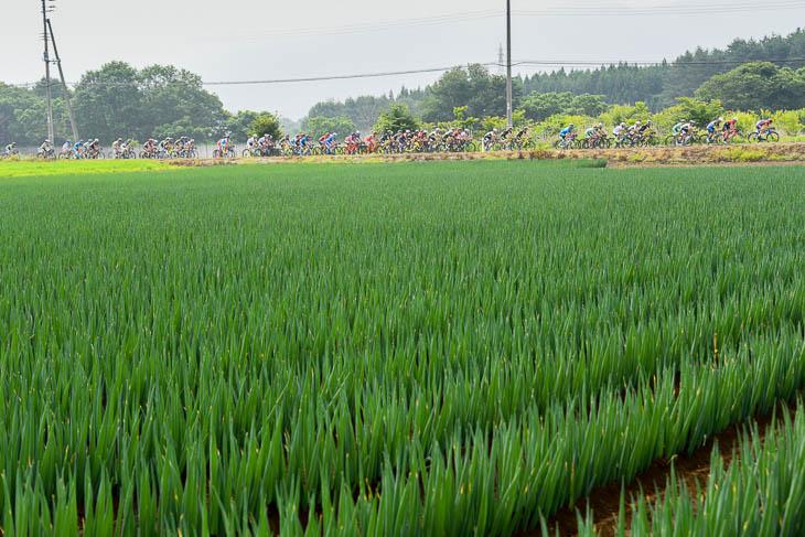 農耕が盛んな階上町 コース沿いのねぎ畑を行く集団