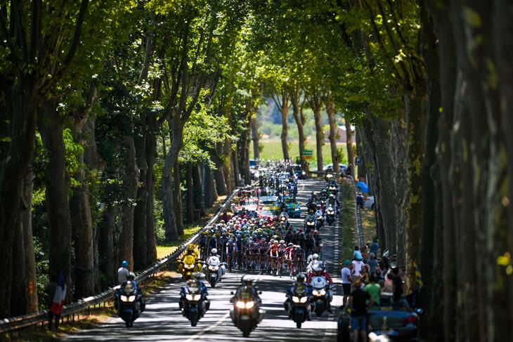 大きな木々が並ぶ並木道を走る