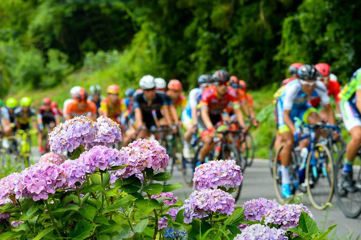 コース沿いに咲くアジサイの花