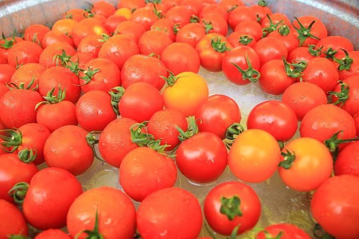 真っ赤に熟れたトマトはちょうど食べやすいサイズ
