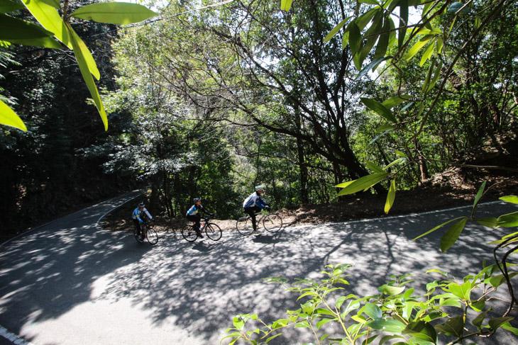 山道は細く、木々が鬱蒼と茂っているなかをヒルクライム