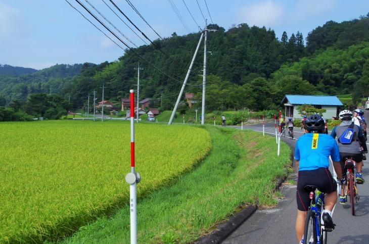 さすが出雲大社の大しめ縄を作るほどの米どころ。美しい稲穂の景色が広がる