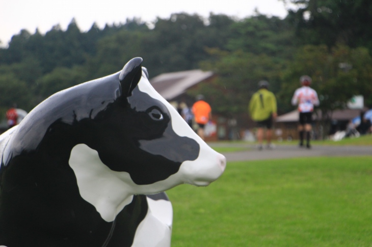 この日唯一見ることの出来た牛(セルロイド製)