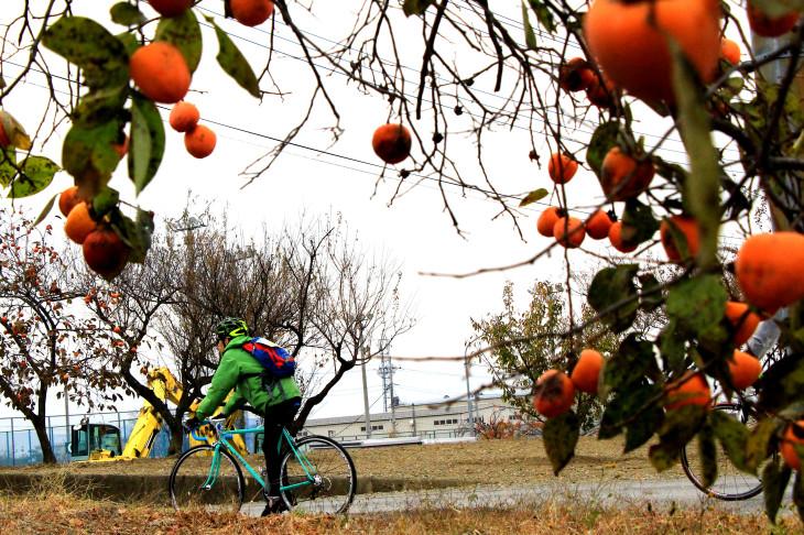 柿が収穫の季節を迎えていた