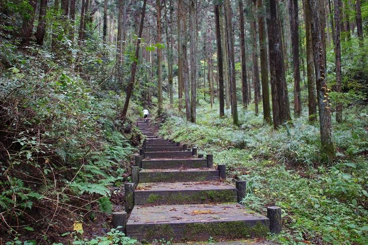 雑木林に整備された階段をビンディングシューズでどんどん行ってしまうメタボ会長