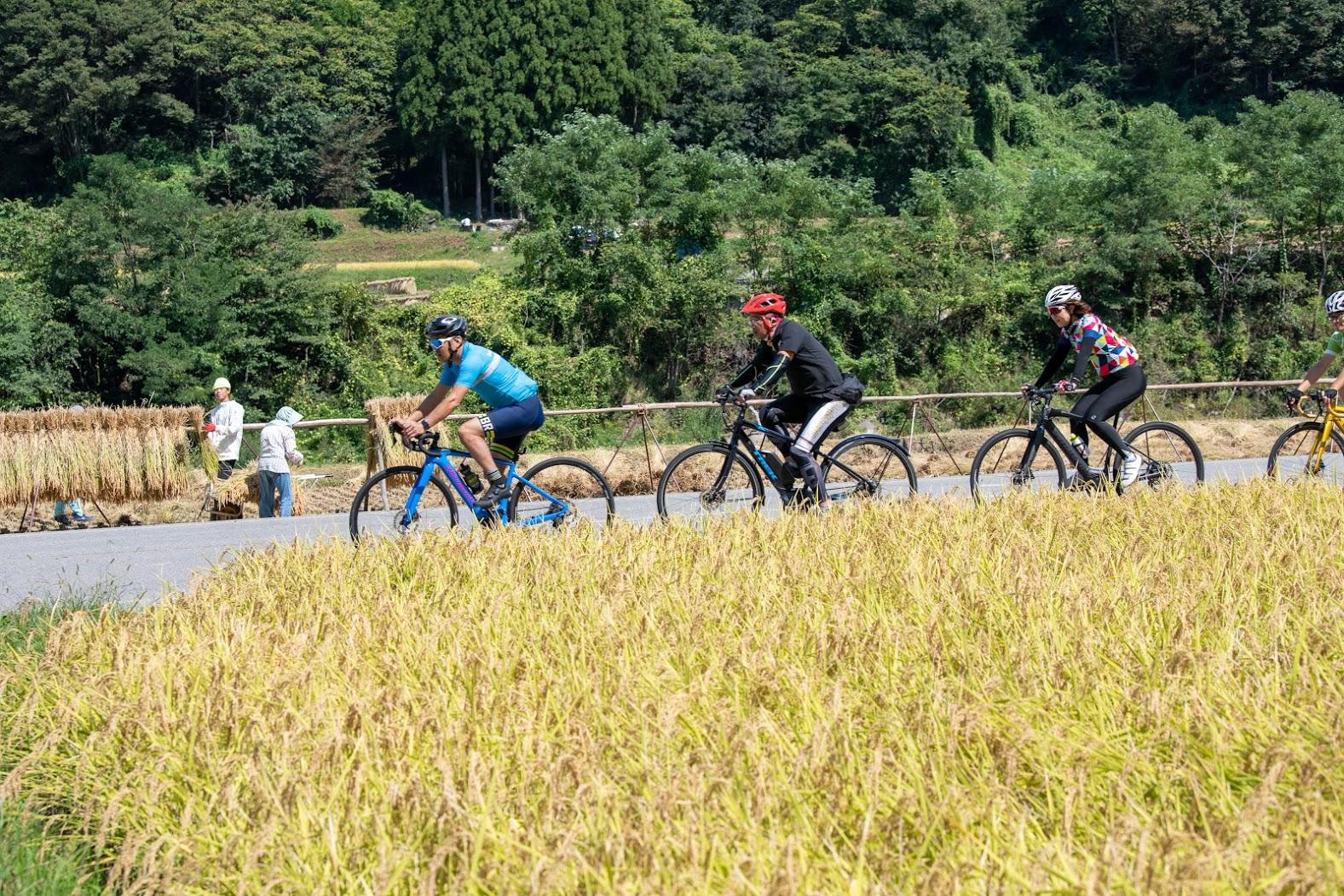 お米の収穫風景を横目に走る